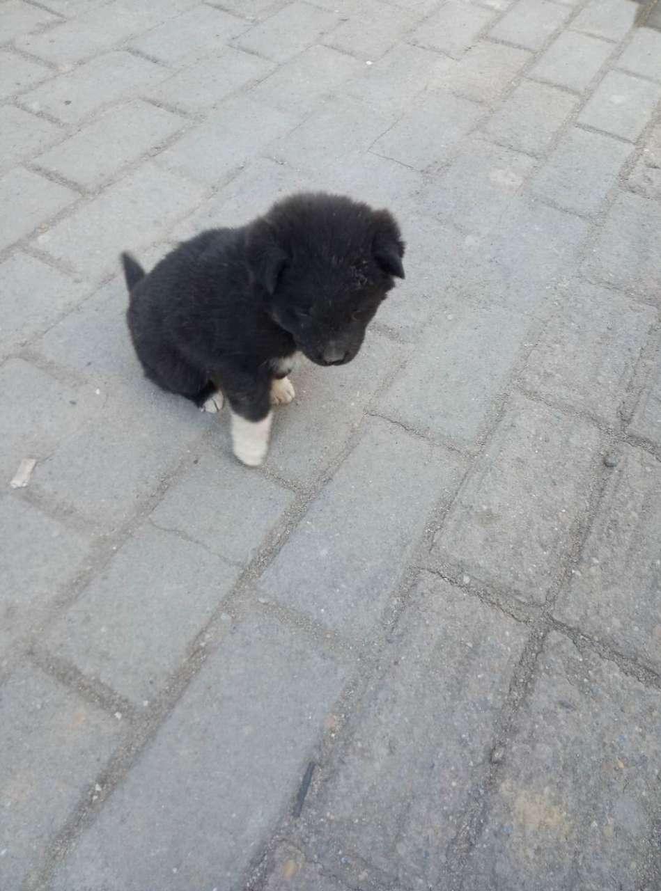 【问答求助】这个是土狗吗?大家认识这种狗吗?