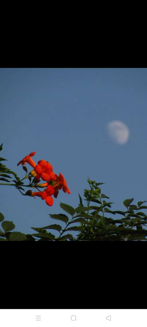 曲式八言绝句(花前月下)花艳绽枝因谁斗色? 谷幽飞鸟只是争春。